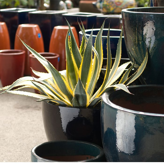 Agave-and-pottery.jpg