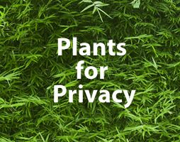 plants4privacy.jpg