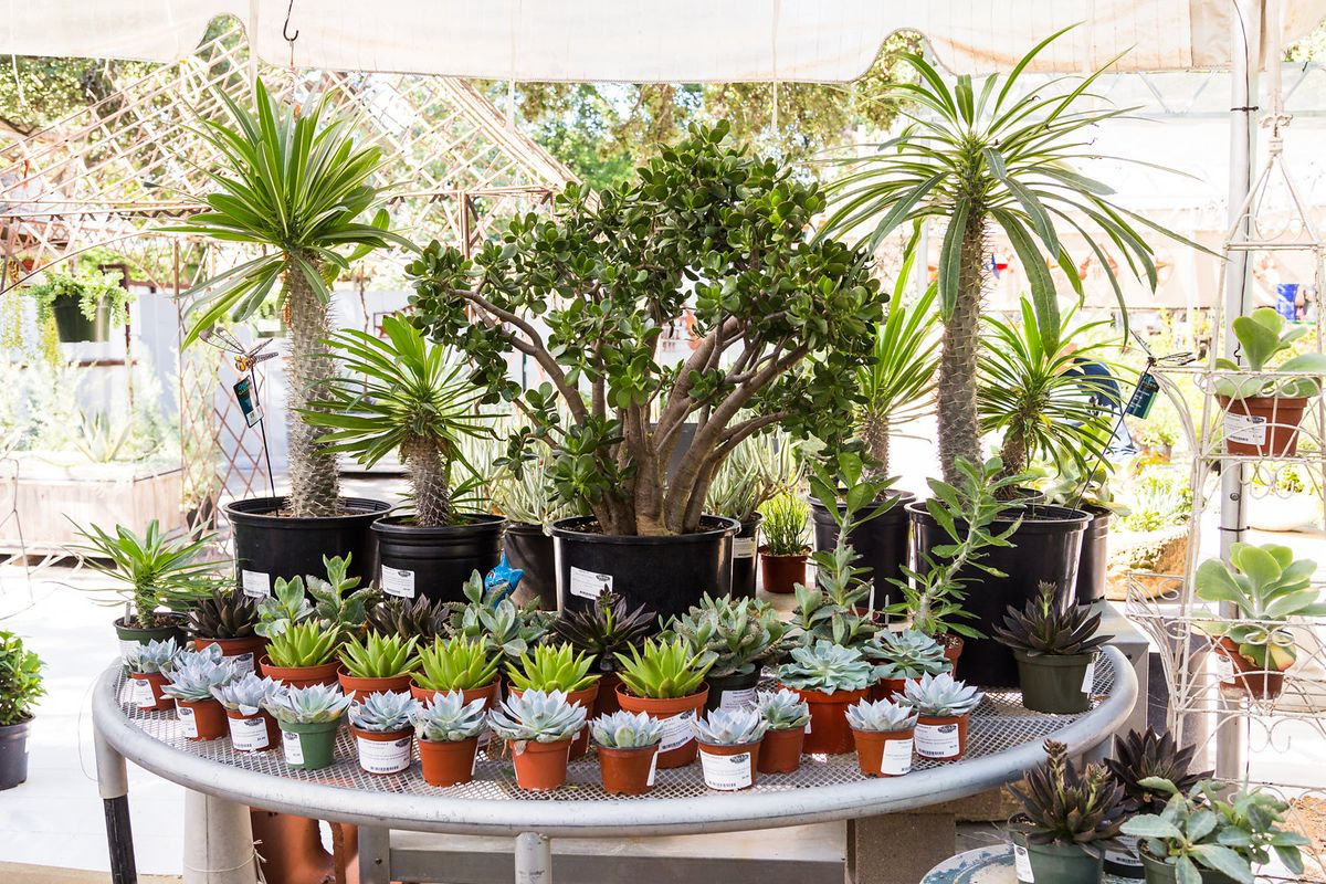 The Great Outdoors Succulent Tent