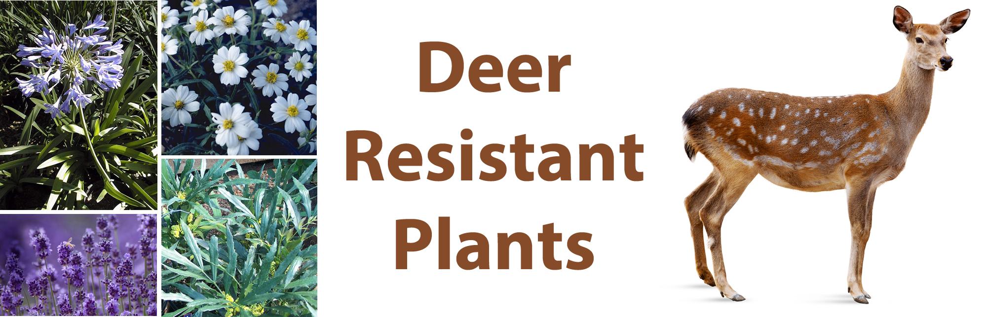 deerheader.fw.png