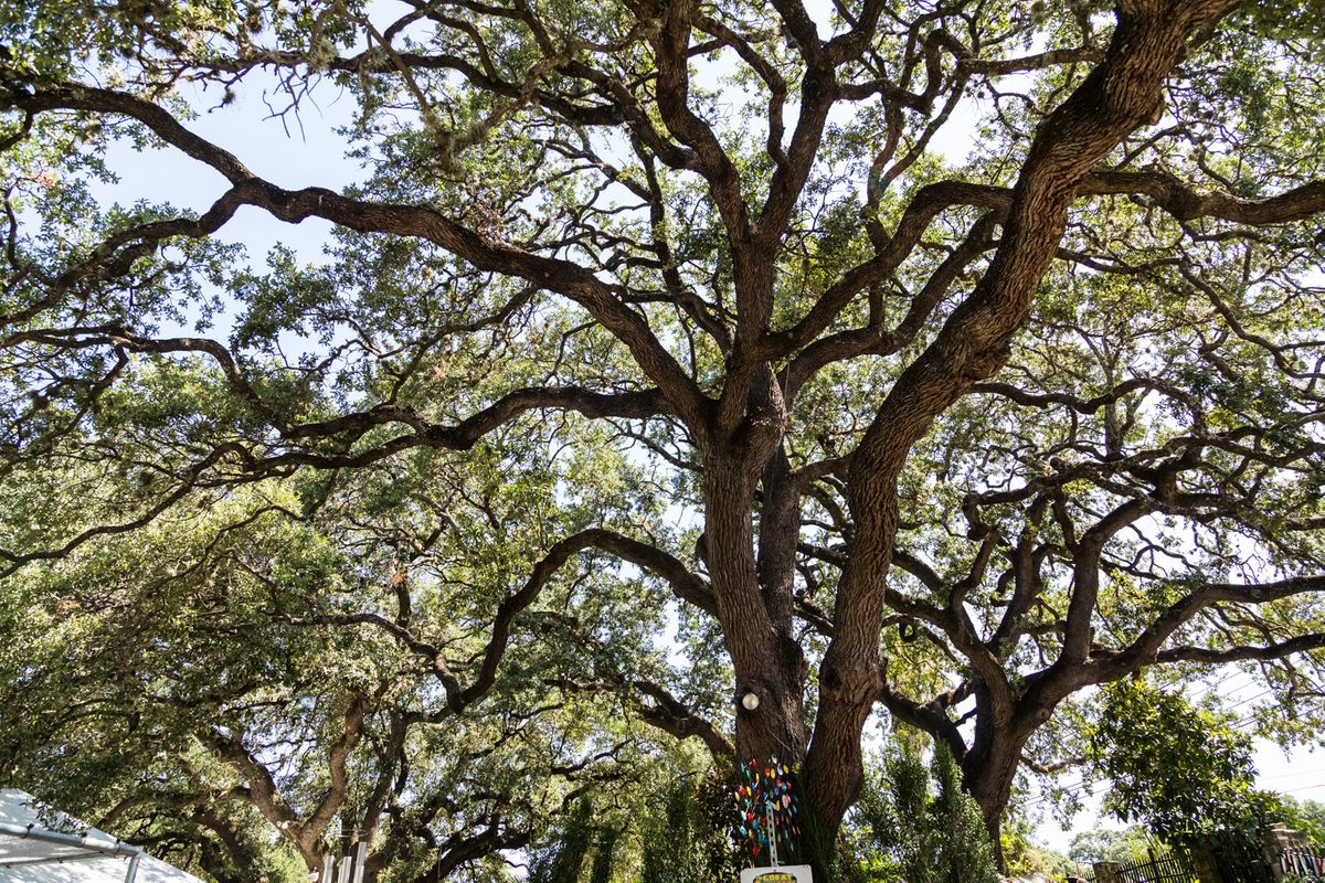 The Great Outdoors Oaks