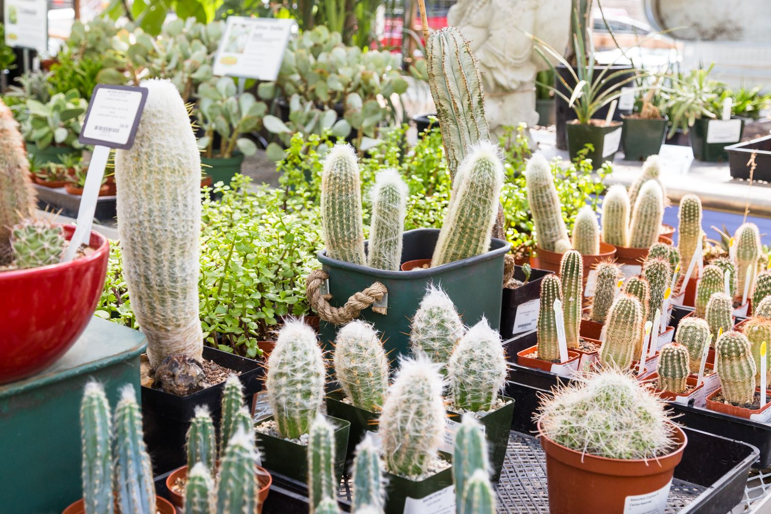 The Great Outdoors Cacti