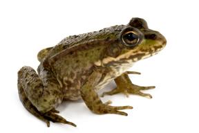 frog small.jpg