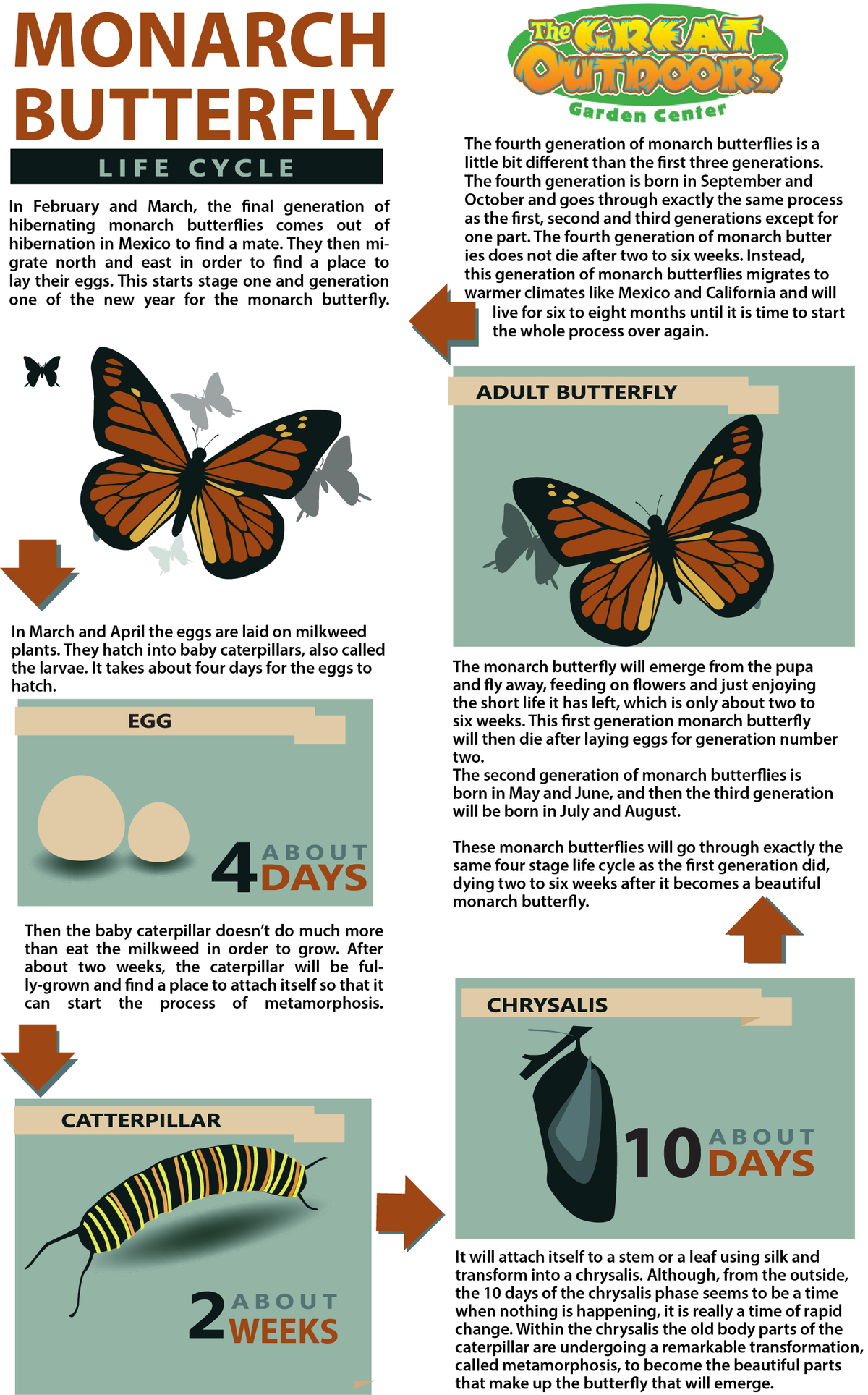 MONARCH BUTTERFLY LIFE CYCLE.png