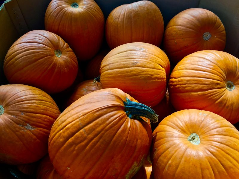 Atlantic Pumpkins.JPG
