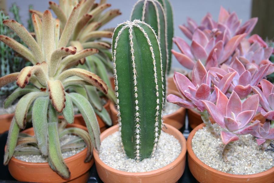 succulent pots.jpg