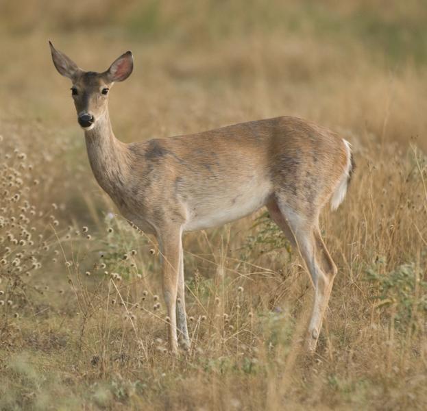 deer circle.jpg