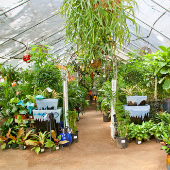 Greenhouse-and-orchid-room 2.jpg