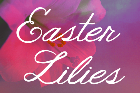 Easter Lily Web Image.png