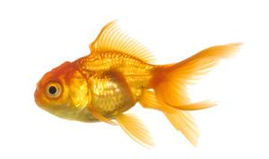 Fish-Fish.png