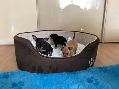 3 pups RT.jpg