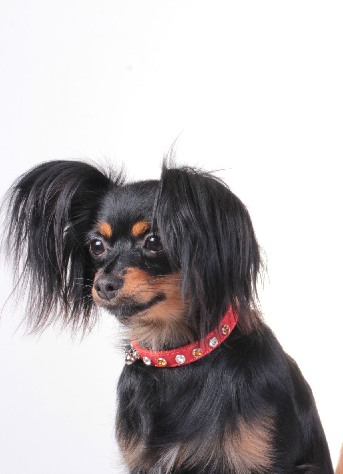 Iveta's doggies Nina.jpg