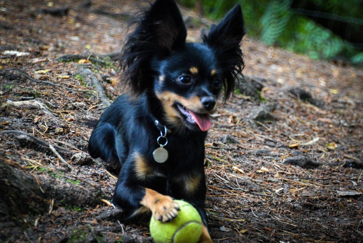 Algel and her ball.jpg