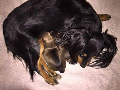 Nina and pups.jpg