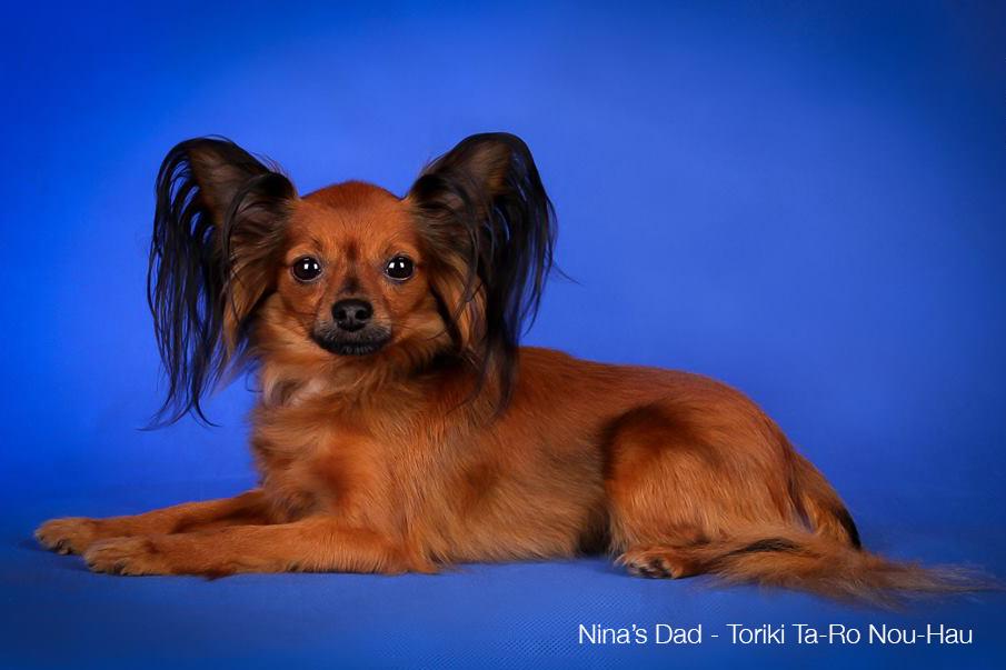 Ninas-Dad-Russian-Toy-Dog-Russian-Kingdom.png