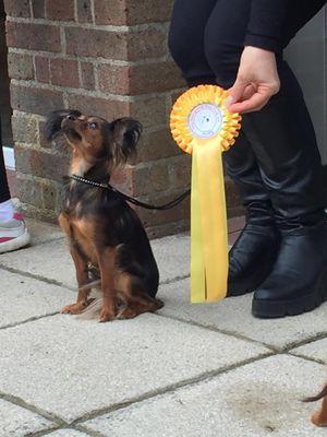 Roxy  RussianToy dogs UK.jpg