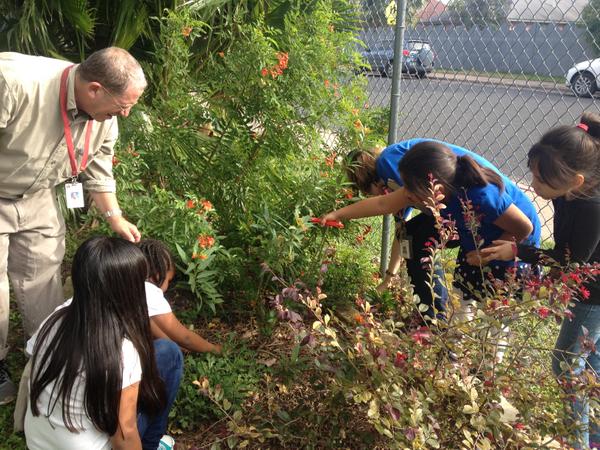 Brooke ES trimming back tropical milkweed.JPG