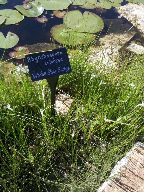 gorzycki pond.jpg