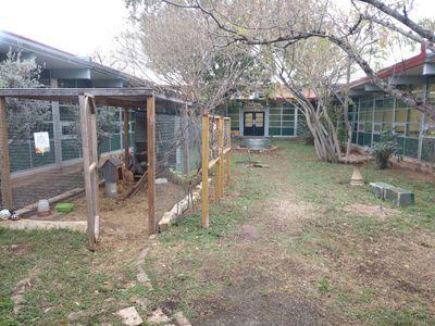 Eastside Chickens1.JPG