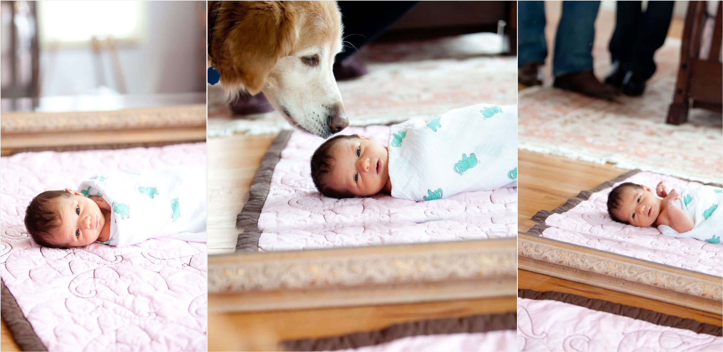 Newborn-swaddled-with-dog-in-baby-nursery-in-hilltop-denver-home-006