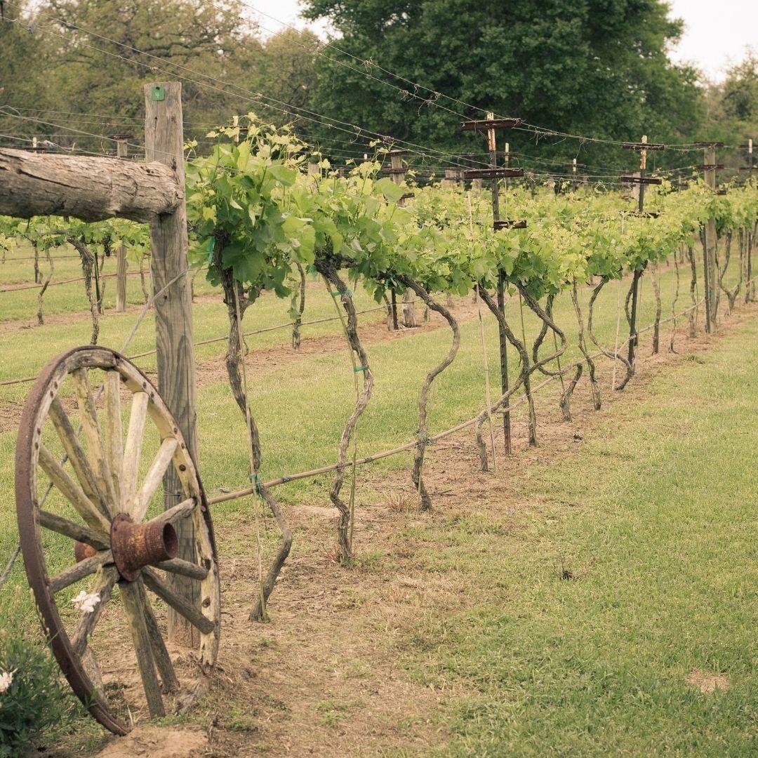 Texas Agriculture Loans.jpg