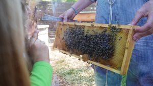 Creative-Action-Bee-Hotel-Apiary-Activity_WEBSITE.jpg