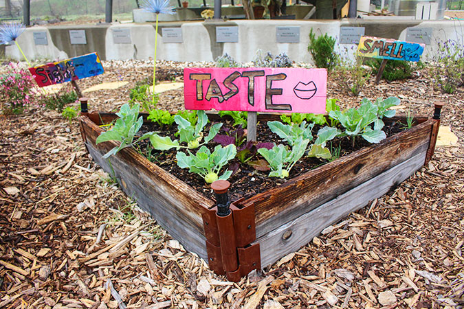 Taste-Garden-Bed-in-Teaching-Garden_WEB.jpg