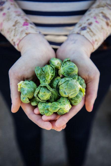 hands-holding-broccoli-SFC-Farmers-Market-Downtow-2014_WEBSITE.jpg
