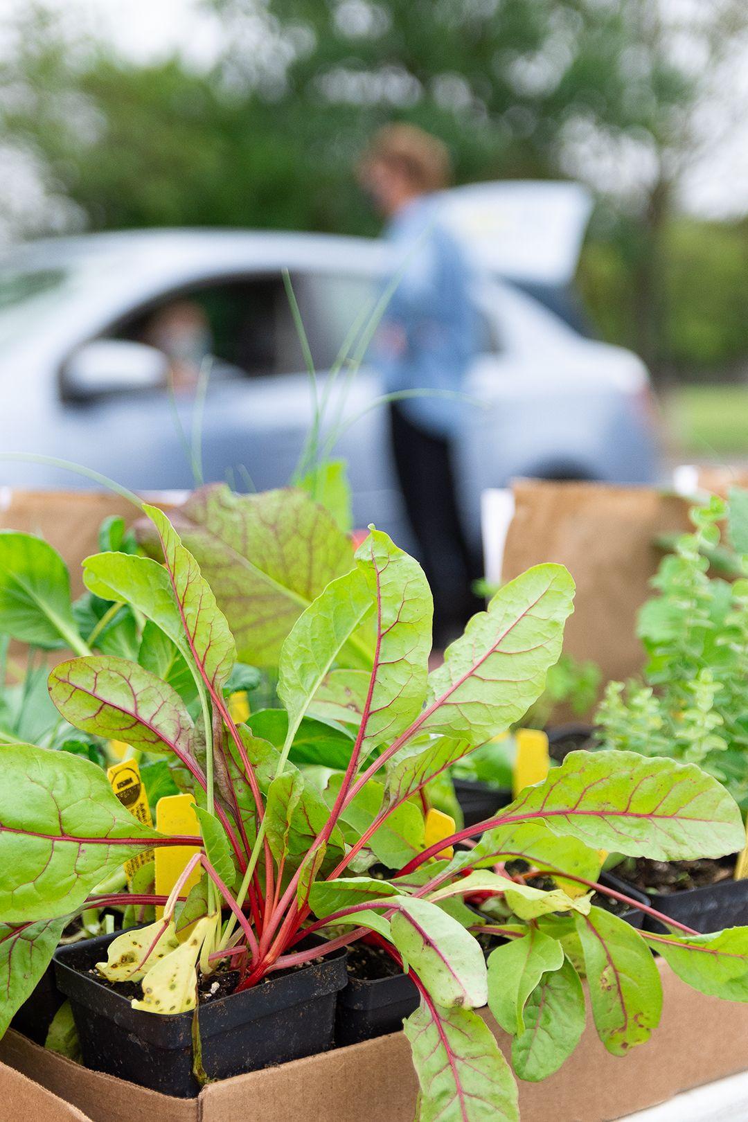 2020-09-23 STH Plants IMG 01 WEB.jpg