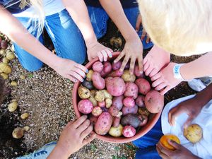 Potato-harvest-from-Austin-State-School-Youth-Garden_675px.jpg
