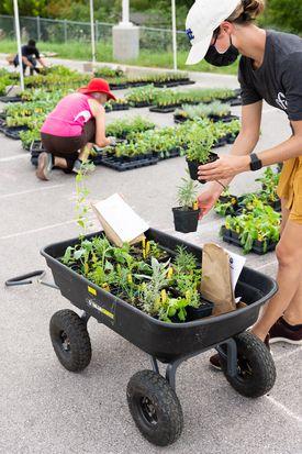 2020-09-15 STH Vols with Wheelbarrow with Plants IMG 01 WEB.jpg