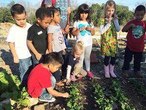 CA-kids-garden_450px.jpg