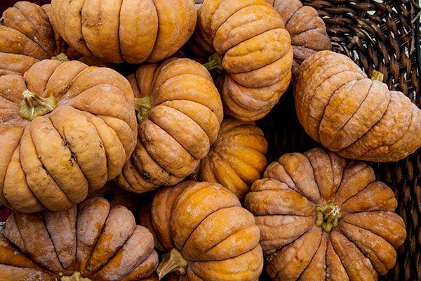 Pumpkins-Horizontal_600px_WEBSITE.jpg
