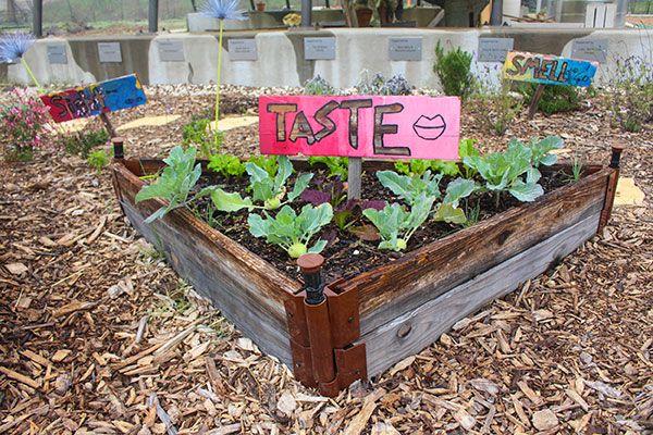 Teaching-Garden-7.jpg