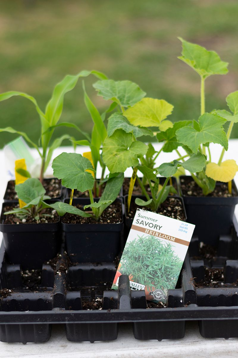 STH 2019-03-27 Seedlings with Seed Packet WEB.jpg