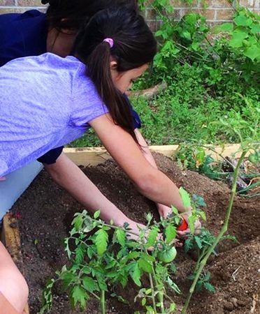 Menchaca_tomato planting_450px.jpg