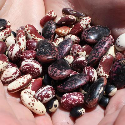 Seeds_Web.jpg