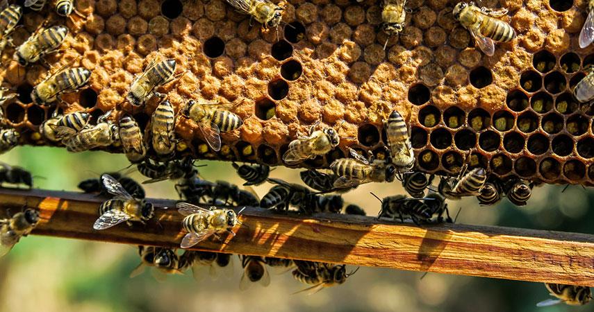 bees-on-honeycomb-free-stock-photo_WEBSITE.jpg