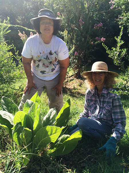 Strengthening communities through community gardens - Sustainable ...