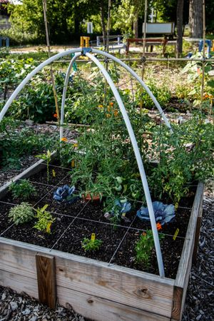 raised_garden_bed_450px.jpg