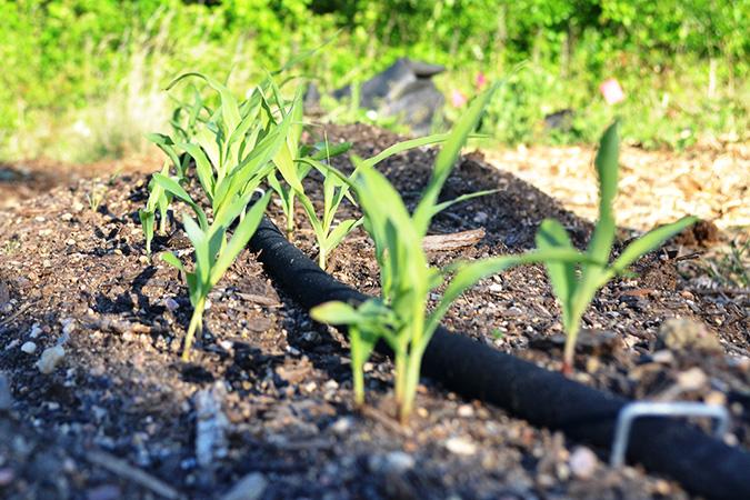 drip_irrigation_675px.jpg
