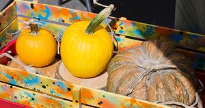 2017-10-07_Pumpkins-in-Wagon_WEBSITE.jpg