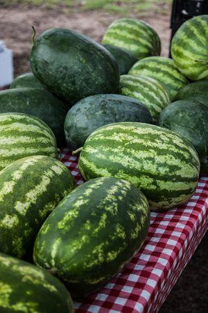 WatermelonsHarvestingAug2015.jpg