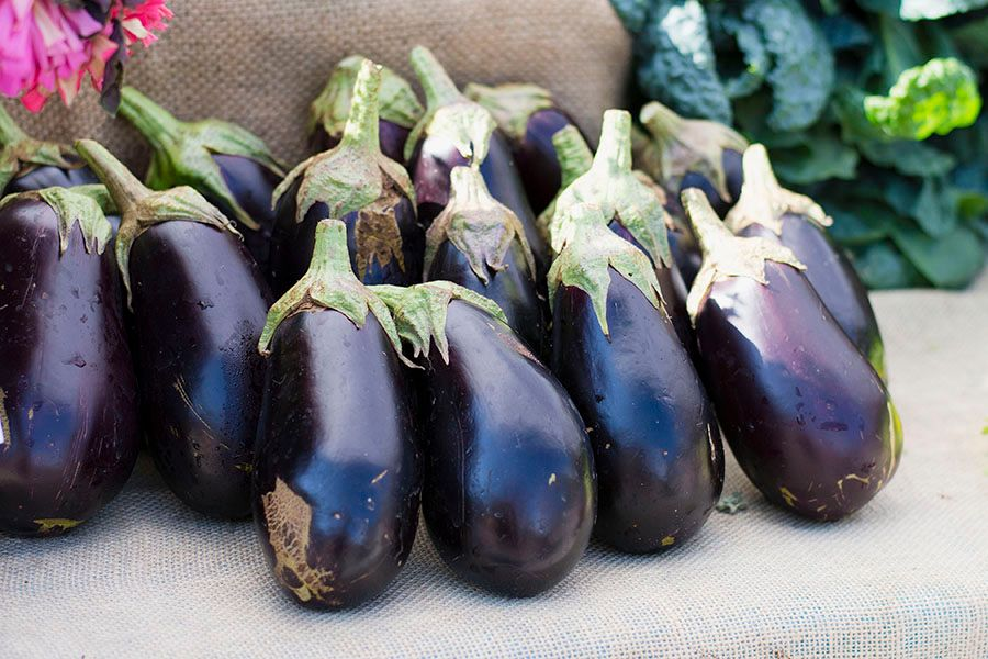 2017-09-30_Agua-Dulce-Eggplants_WEBSITE.jpg
