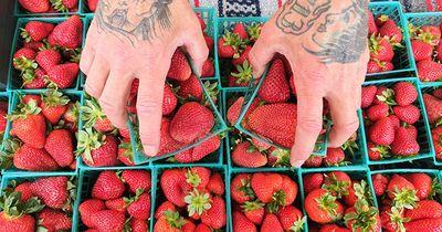 strawberry hand engel march 2018.jpg