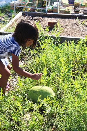 little_girl_with_watermelon_450px.jpg