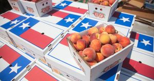 Lightsey Farms Texas Peaches Boxes