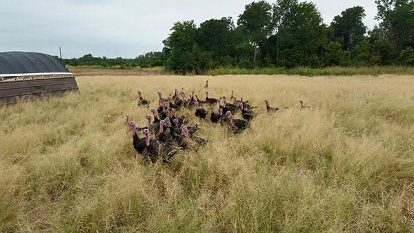 Richardson Farms flock_WEBSITE.jpg