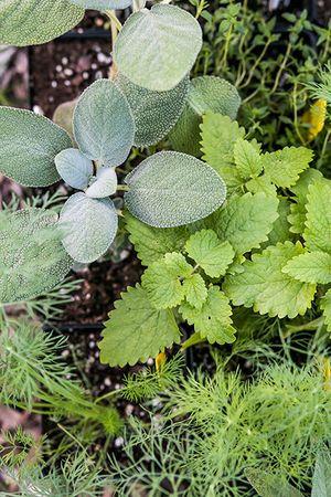 herb_garden_450px.jpg