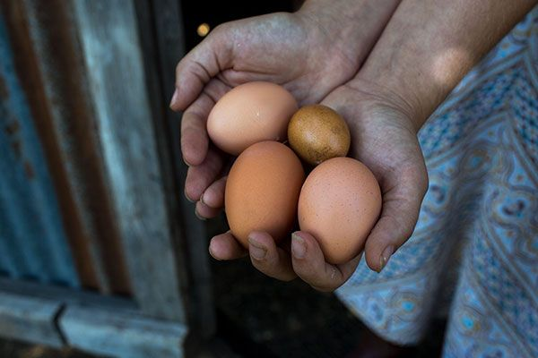 Hands Holding Eggs